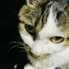 ネコの病気〜甲状腺機能亢進症の再検査の話