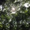 ピクニック@林試の森公園