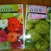 ジニア(百日草)の種まき