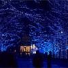 毎冬恒例『青の洞窟』が今年も開催!60万球の青い光が、渋谷の夜をロマンチックに彩る!