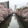 目黒川の桜と五反田アリエッタでランチ