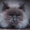 世界で1番マツコデラックスに似ている猫
