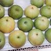 秋の味覚、20世紀梨を買ってみました。
