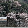 念願の、古虎渓駅の桜を撮影しました。1本だけ。