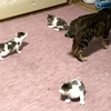 生後一ヵ月の子猫の食事
