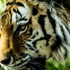 【メンタルトレーニング】人の評価を気にしたり、自分の心の動揺を避ける方法 自分を巨大な虎に例える