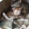 保護猫のムーアさんの子育て⑥育児放棄。