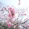 桜を見る時は、ガンダムスタイルで。