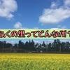 糸島の直売所「福ふくの里」ってどんなところ?