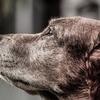 人間と犬がここまで深い絆で結ばれるなんて・・・!やっぱり犬はかわいい!
