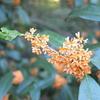 暖かい感じがする 秋Orange 秋leaf