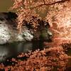 代々木公園と千鳥ヶ淵緑道(ライトアップ)でお花見