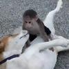 会えば必ず喧嘩勃発?歴史上で有名な犬猿の仲だった人たち
