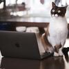 なぜ転職したい時に必要な「介護現場の生の口コミ情報」はネット上に少ないのか?