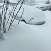 「ヤバすぎてやばい」 北陸の雪