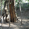 3月中旬:明治神宮内をお写んぽ。その1 林道編