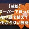 【栽培】スーパーで買った人参の切れ端を植えてみたら思いもよらない展開に!