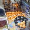 ゲームセンター イミグランデ厚木店でUFOキャッチャー たこ焼きキャッチャーをプレイ