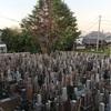 #谷中 のシンボルツリー #ヒマラヤ杉 折れる