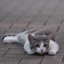 猫じゃらしよりもスパイスを。