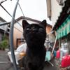 猫撮りは難しい?(4)
