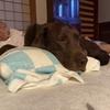 うちのポンコツ犬。#18