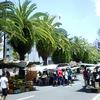 【高知の日曜市】【前編】地元民から愛され、観光客もやってくる日曜市においでよ!