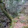 大岩ガ岳へのハイキング2019(その1)登山道前半