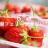 いちご狩り【滋賀県のいちご園フェリーチェへ】