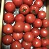 三重県産「おひさまトマト」頂きました。