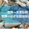 世界一大きな貝と世界一小さな貝はなに?【豆知識】