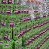 【最新画像あり】サトーココノカドー!クレヨンしんちゃん展inイトーヨーカドー春日部店を覗いてきました♪