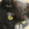 猫の集会三回目 師走、猫の手要りますか?