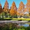 横浜動物園ズーラシアの噴水池(神奈川県横浜)
