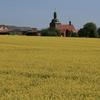 菜の花を求めて ドイツへ 2 デジンゲローデ