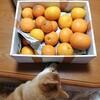 みかん祭~♪ 犬に柑橘類はダメなの?!