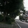 戸塚宿を過ぎ、道沿いに松が増えてきた - 旧東海道の旅(13)