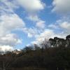お墓まいりに行ってきました。冬空・・・枯れ葉が舞ってます。