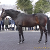 2021年新種牡馬:ワンアンドオンリー