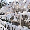 梅とおみくじ 道明寺天満宮での撮影の続き
