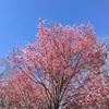 小石川植物園でひなたぼっこ