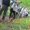 清瀬のヒマワリ、新座のキツネノカミソリ 真夏の花を巡る