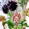 最近の花の流行は?トレンドを振り返ってみる。