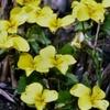 阿蘇地方の原野に 野の花の季節