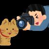 「岩合光昭の世界ネコ歩き」をみんなが見たら世界が平和になる