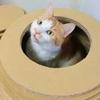 ネコの鼻水が黄色ならこの病気を疑おう