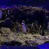 【カフェ巡り39】すみだ水族館内「ペンギンカフェ」ペンギンの唐揚げはないよ。
