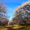 梅が咲きました(1)~地域振興のためのスマホ写真活用(10)