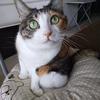 【愛猫日記】毎日アンヌさん#265