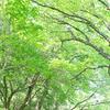 愛知県森林公園植物園の新緑の小路